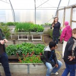 Greenhouse activity